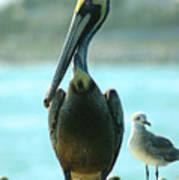 Tall Pelican Art Print
