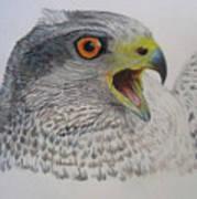 Talon Art Print