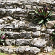 Talum Ruins Plant Life Art Print