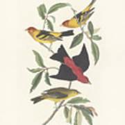 Tanagers Print by John James Audubon