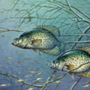 Tangled Cover Crappie II Art Print