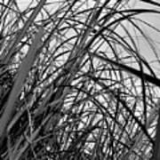 Tangled Grass Art Print