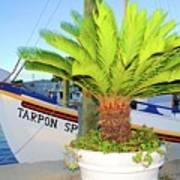 Tarpon                 Tarpon Palm                                     Art Print