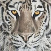 Taupe Tiger Art Print