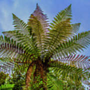 Te Puia Palm Tree Art Print