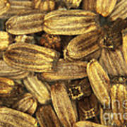 Teasel Seeds Art Print