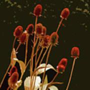 Teazels In A Secret Garden  Art Print