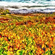 Temecula Vineyard Art Print