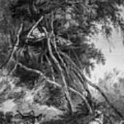 Temporary Tree Dwelling Art Print
