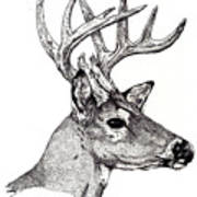 Ten Point Buck Art Print