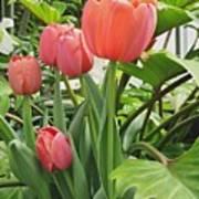 Tender Tulips Art Print