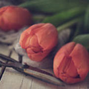 Tending The Tulips Art Print