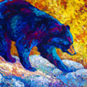 Tentative Step - Black Bear Art Print