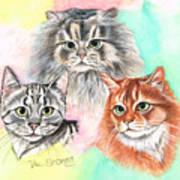 Tentative Trio Art Print
