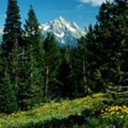 Teton Meadow Art Print