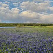Texas Bluebonnet Bliss Art Print