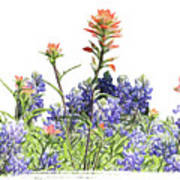 Texas Bluebonnets And Red Indian Paintbrushes Art Print