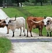 Texas Cattle Guard Art Print