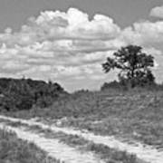 Texas Hill Country Trail Art Print
