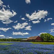 Texas Springtime Art Print
