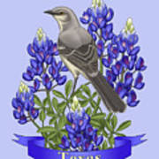 Texas State Mockingbird And Bluebonnet Flower Print by Crista Forest