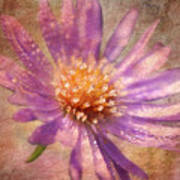 Textured Aster Art Print by Lois Bryan