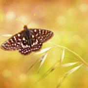 Textured Chalcedon Butterfly Art Print