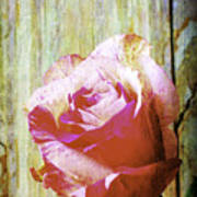 Textured Pink Red Rose Art Print