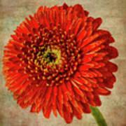 Textured Red Daisy Art Print