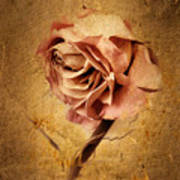 Textured Rose Art Print