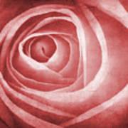 Textured Rose Macro Art Print by Meirion Matthias