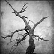 Textured Tree Print by Bernard Jaubert