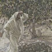 The Accursed Fig Tree Art Print by Tissot