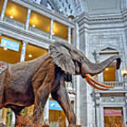 The African Bush Elephant In The Rotunda Of The National Museum Of Natural History Art Print