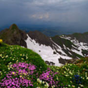 The Alps Wildflowers Art Print