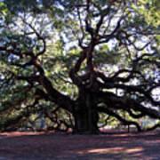 The Angel Oak In Charleston Sc Art Print