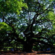 The Angel Oak In Summer Art Print