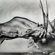 The Arabian Oryx Art Print