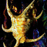 The Arthritic Spider Conch Seashell Art Print