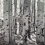 The Aspen Forest In Black And White  Art Print