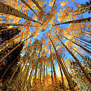The Aspens Above - Colorful Colorado - Fall Art Print