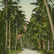 The Avenue Of Palms Guam Li Art Print