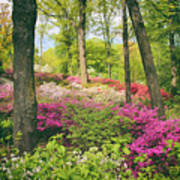 The Azalea Woodland Art Print