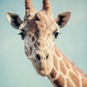 The Baby Giraffe Art Print