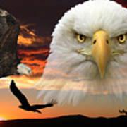 The Bald Eagle Art Print