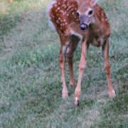 The Bambi Stance Art Print