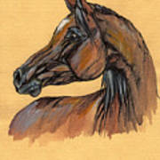 The Bay Arabian Horse 10 Art Print