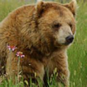 The Bear 1 Dry Brushed Art Print