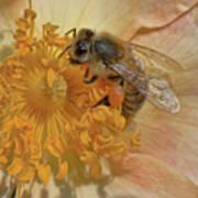 The Beautiful Bee Art Print