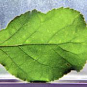 The Beauty Of A Leaf Art Print